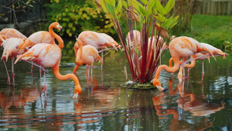 Flamingos-by-Water-Plant
