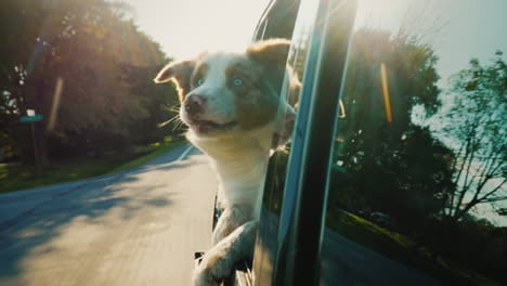 Dog-in-Car-With-Window-Down