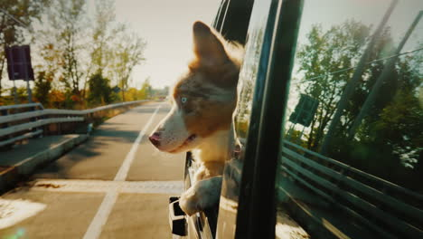 Dog-Looking-Out-of-a-Car-Window