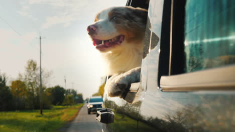 Happy-Dog-Looks-Out-Car-Window