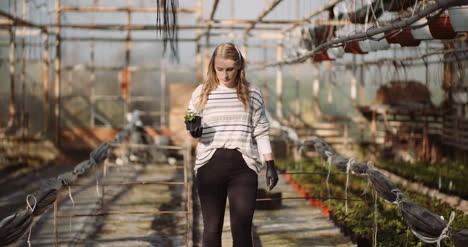 Female-Gardener-Examining-Plants-At-Greenhouse-8