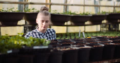 Agriculture-Female-Gardener-Working-With-Flowers-Seedlings-In-Greenhouse
