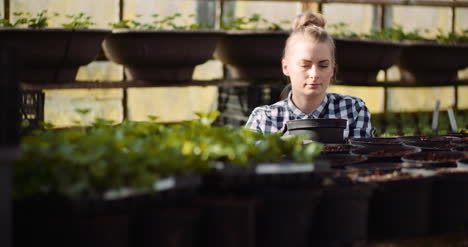Agriculture-Female-Gardener-Working-With-Flowers-Seedlings-In-Greenhouse-2