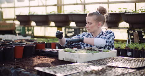 Agriculture-Female-Gardener-Working-With-Flowers-Seedlings-In-Greenhouse-4