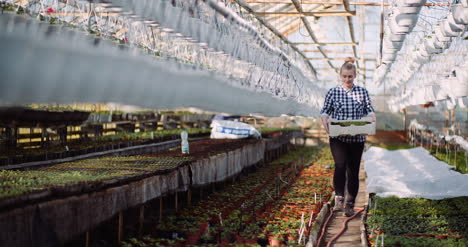 Agriculture-Female-Gardener-Working-With-Flowers-Seedlings-In-Greenhouse-5