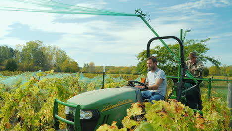Farmers-Remove-Nets-From-Grape-Vines