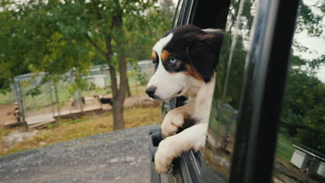Dog-Leaving-Animal-Shelter-in-Car