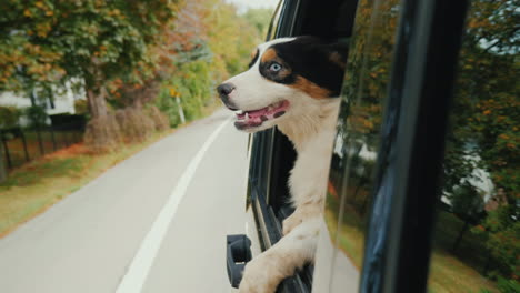 Happy-Dog-Looking-Out-of-Car-Window