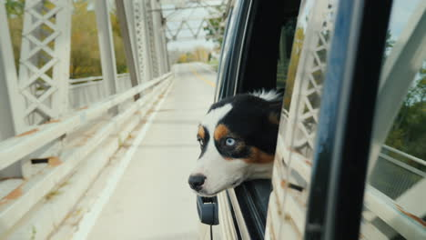 Dog-Looking-Out-of-Moving-Car