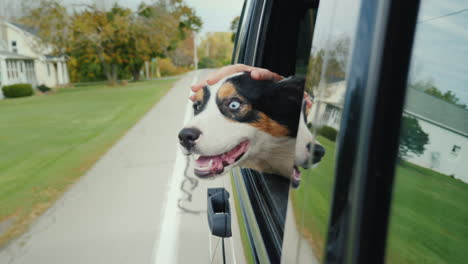 Hand-Strokes-Dog-in-Car-Window
