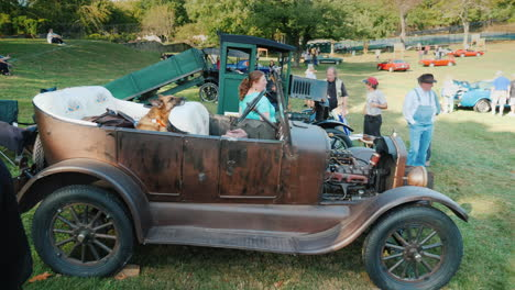 Dog-in-a-Classic-Car