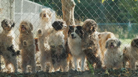 Dogs-Looking-Through-a-Fence