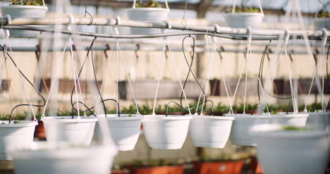 Agriculture-Flower-Seedlings-In-Greenhouse-34