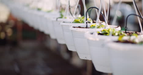 Agriculture-Flower-Seedlings-In-Greenhouse-38