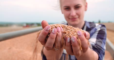 Farmer-Examining-Wheat-Grains-In-Hands-1