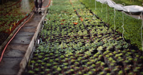 Agriculture-Gardener-Watering-Flowers-At-Greenhouse-