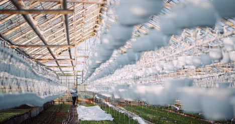 Agriculture-Gardener-Watering-Flowers-At-Greenhouse-9