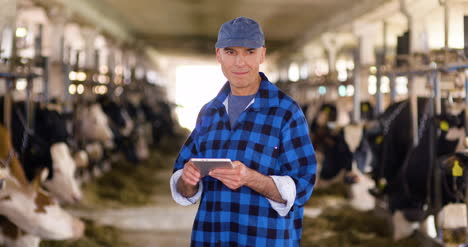Cow-Breeder-Checking-On-Livestock-And-Using-Digital-Tablet