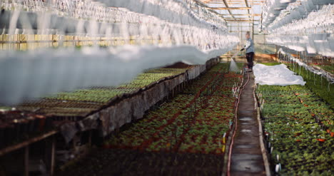 Agriculture-Gardener-Watering-Flowers-At-Greenhouse-12