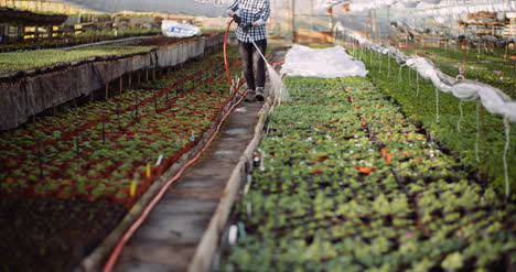 Agriculture-Gardener-Watering-Flowers-At-Greenhouse-3