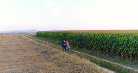Aerial-View-Of-Growing-Corn-On-Agriculture-Field-Farmers-Walking-At-Agricultural-Field