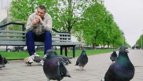 Middle-Aged-Man-Feeding-Pigeons-In-The-Park
