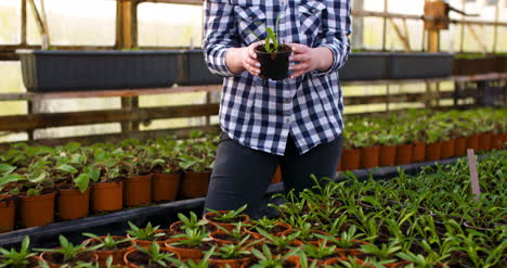 Young-Female-Botanist-Examining-Potted-Plant
