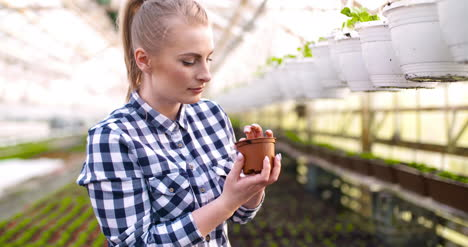 Young-Female-Botanist-Examining-Potted-Plant-1