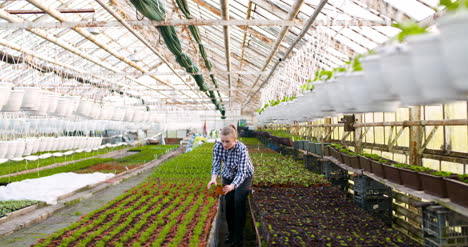 Agriculture-Female-Gardener-Working-In-Greenhouse-2
