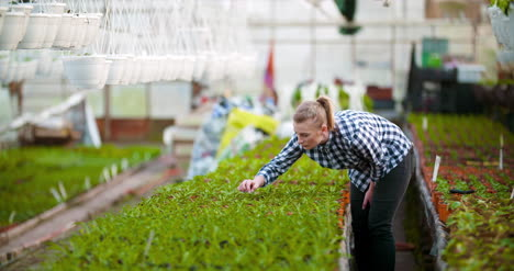 Agriculture-Female-Gardener-Working-In-Greenhouse-5