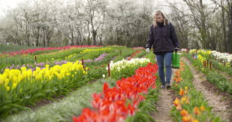 Agriculture-Farmer-Watering-Tulips-At-Tulip-Flower-Plantation