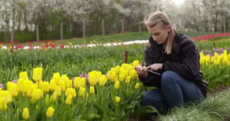 Female-Researcher-Walking-While-Examining-Tulips-At-Field-34