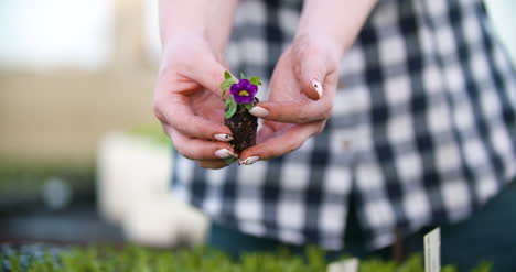 Young-Female-Botanist-Examining-Potted-Plant-24