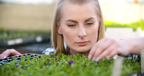 Agriculture-Farmer-Researches-Examining-Flowers-Seedlings-At-Greenhouse