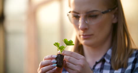 Close-Up-Of-Scientist-Or-Researcher-Looking-At-Young-Plant-And-Examining-Plant-3