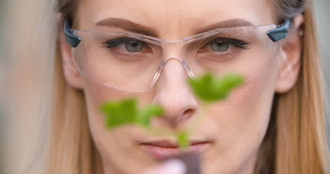 Close-Up-Of-Scientist-Or-Researcher-Looking-At-Young-Plant-And-Examining-Plant-5