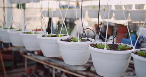 Agriculture-Flower-Seedlings-In-Greenhouse-39