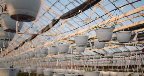 Agriculture-Flower-Seedlings-In-Greenhouse-40