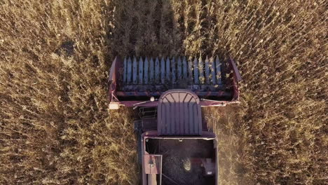 Harvesting-Sunflower-View-Vertically-On-Top-Of-The-Combine-Mechanism-That-Quickly-Goes-Through-The-F
