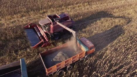 Harvesting-Sunflower-Combine-Unloads-Sunflower-Seeds-In-A-Lorry-The-Camera-Flies-Around