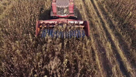 Combine-Harvests-Of-Sunflower-View-From-Above-One-Can-See-The-Mechanism-Of-The-Harvester-Which-Cuts-