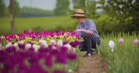 Female-Researcher-Walking-While-Examining-Tulips-At-Field-4