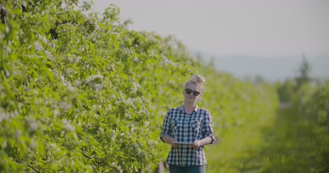 Agronomist-Or-Farmer-Examining-Blossom-Branch-In-Orchard-17