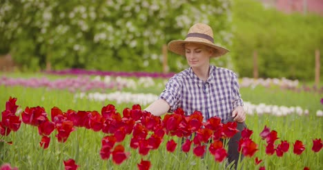 Female-Researcher-Walking-While-Examining-Tulips-At-Field-7