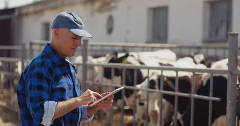Farmer-Using-Digital-Tablet-While-Looking-At-Cows
