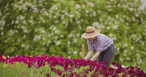 Female-Researcher-Walking-While-Examining-Tulips-At-Field-16