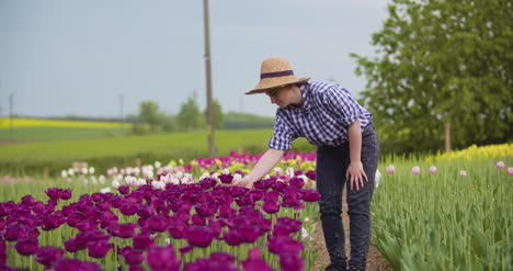 Female-Farmer-Working-On-Tulips-Field