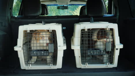 Two-Cages-For-The-Transport-Of-Animals-In-The-Trunk-Of-The-Car-Inside-Are-Two-Puppies-Transportation