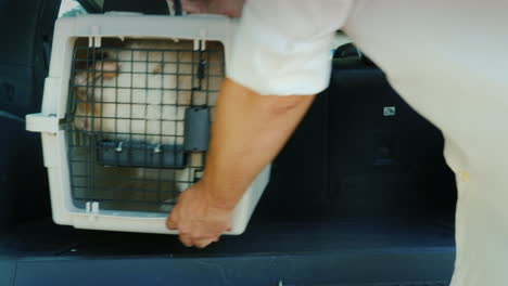 A-Man-Puts-A-Cage-With-Puppies-In-The-Trunk-Of-A-Car-Transportation-And-Delivery-Of-Live-Animals
