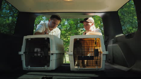 A-Man-And-A-Woman-Are-Loading-The-Cages-With-Dogs-Into-The-Trunk-Of-A-Car-For-Transportation